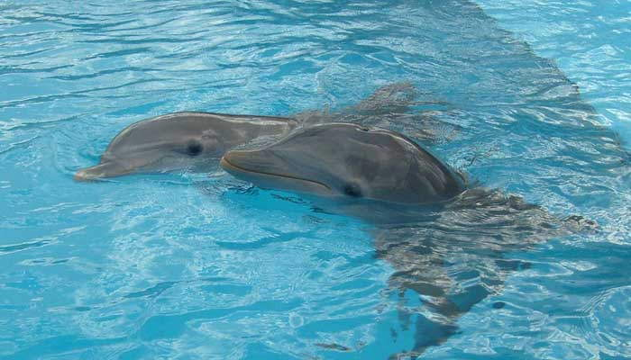 Varios delfines