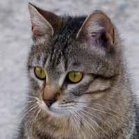 Gestación de un gato